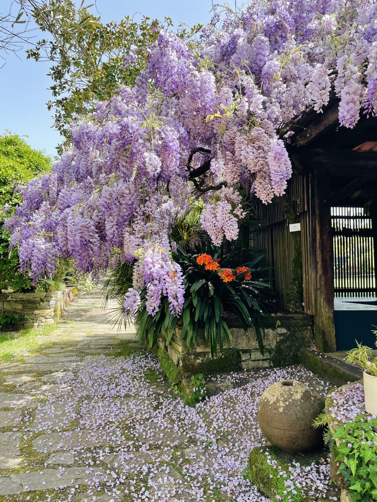 Jardín botánico Vigo